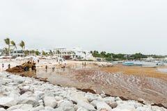 PUNTA CANA, REPÚBLICA DOMINICANA - 18 DE JUNIO DE 2015: El intentar local de la gente quita la mala hierba del agua en playa Clas Imagenes de archivo