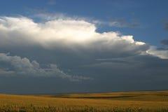 Punta del cedro Imagen de archivo libre de regalías