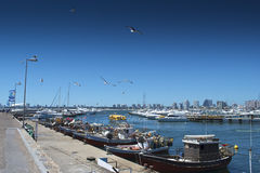 Punta del Este Pier. The peer of Punta del Este marina at summer with a blue clean sky, sea gulls flying by, fisher boats, yatchs and the landscape of the city Stock Image