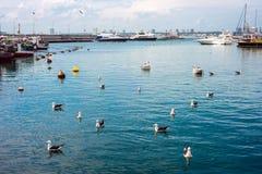 Punta del Este, Uruguay. Yachts and boats, Punta del Este, Uruguay Stock Photography