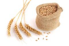 Punta del grano e grano del grano nella borsa di tela da imballaggio su fondo bianco Immagini Stock
