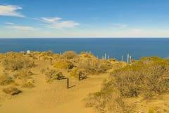 Punta del Marquez Synvinkel, Chubut, Argentina royaltyfria foton