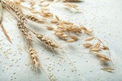 Punta di grano su un fondo bianco fotografie stock libere da diritti
