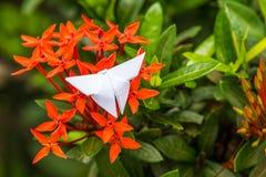 Punta e farfalla rosse del fiore da carta Fotografia Stock Libera da Diritti