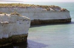 Punta Loma, Argentinië, met Magellanic-magellanicus van aalscholverphalacrocorax op de klippen Stock Foto