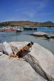 Punta Molentis, Villasimius Stock Image