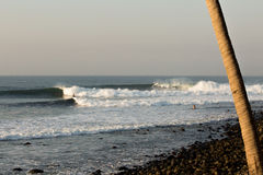 Punta Roca. Set waves line up along the cobblestone point break of Punta Roca in El Salvador. One surfer prepares a nice bottom turn Stock Images