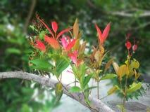 Punta rossa del fiore della foglia Fotografia Stock Libera da Diritti
