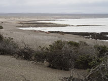 Punta Tombo, Παταγωνία Στοκ φωτογραφίες με δικαίωμα ελεύθερης χρήσης