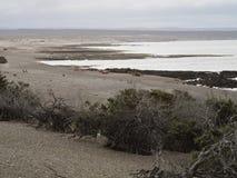Punta Tombo, Patagonia Royalty Free Stock Photos