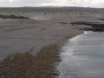 Punta Tombo, Patagonia Stock Photos