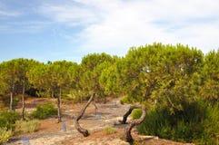 Punta Umbria Hiszpania Obrazy Royalty Free