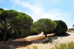 Punta Umbria Hiszpania Zdjęcie Royalty Free