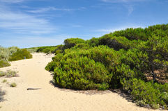 Punta Umbria Spain - dunes Photographie stock