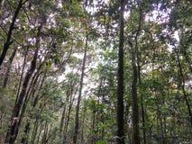 Puntang Indonésie de montagne Images stock