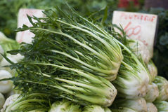 Puntarelle或苦苣生茯在市场上 免版税库存图片