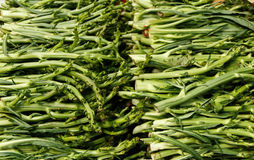 Puntarelle, asparagus chicory Stock Photography