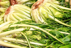 Puntarelle or cicoria di catalogna or cicoria asparago is a variant of chicory Cichorium intybus. Puntarelle or cicoria di catalogna or cicoria asparago is a Royalty Free Stock Images
