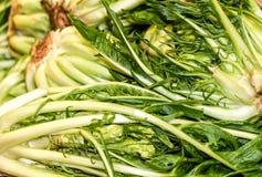 Puntarelle or cicoria di catalogna or cicoria asparago is a variant of chicory Cichorium intybus stock photo