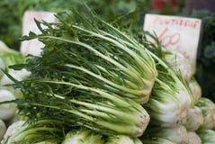 Puntarelle eller Chicory på marknadsföra Royaltyfri Bild