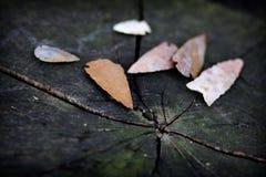 Puntas de flecha del nativo americano Fotos de archivo