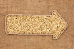 Puntatore fatto dalla corda con l'orzo del grano che si trova su tela di sacco Fotografie Stock