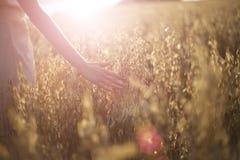 Punte commoventi vaghe del grano della mano al tramonto fotografia stock