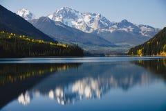 Punte dei fermi di Sun di pioppo dorato Lago birkenhead, BC, il Canada Immagini Stock Libere da Diritti