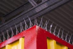 Punte del piccione Fotografie Stock Libere da Diritti