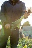 Punte della guarnizione dell'uomo di un porro con il coltello Immagine Stock Libera da Diritti