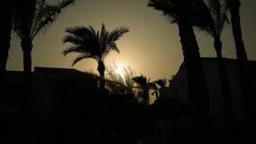 Punte e siluetta delle palme al tramonto archivi video