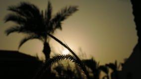 Punte e siluetta delle palme al tramonto stock footage