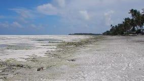 puntelli con la spiaggia sabbiosa ed il mare calmo a Zanzibar stock footage