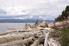 Puntello del fiume con driftwood immagine stock