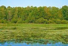 Puntello del lago Fotografia Stock Libera da Diritti