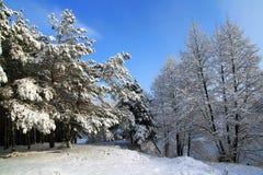 Puntello dello Snowy del lago Fotografia Stock Libera da Diritti