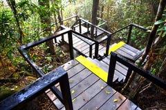 Punti circondati nella foresta Immagini Stock Libere da Diritti