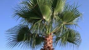 Punti del primo piano sulla strada in palmtree rosso dello shoesCloseup con le foglie sul vento del colpo stock footage