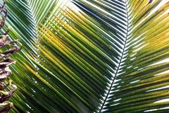 Punti della palma Fotografia Stock Libera da Diritti