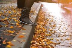 Punti della stagione di autunno immagini stock