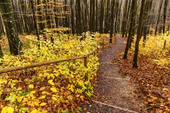 Punti di legno nella foresta di autunno Fotografie Stock Libere da Diritti