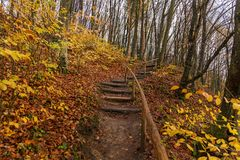 Punti di legno nella foresta di autunno Fotografia Stock Libera da Diritti