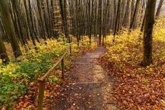 Punti di legno nella foresta di autunno Immagini Stock