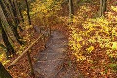 Punti di legno nella foresta di autunno Immagine Stock