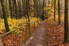 Punti di legno nella foresta di autunno Fotografia Stock