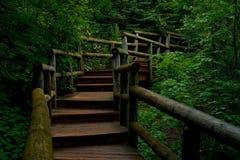 Punti di legno precipitanti a cascata, parco di stato del fiume della cascata, mn immagine stock libera da diritti