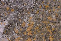 Punti di muschio giallo sulla vecchia pietra immagini stock libere da diritti
