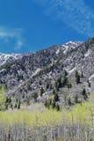 Punti di vista panoramici di Wasatch Front Rocky Mountains dal piccolo canyon del pioppo in molla in anticipo con neve, i pini e  Immagine Stock