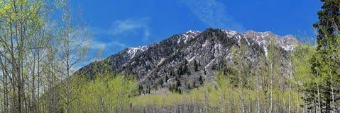 Punti di vista panoramici di Wasatch Front Rocky Mountains dal piccolo canyon del pioppo in molla in anticipo con neve, i pini e  Fotografia Stock