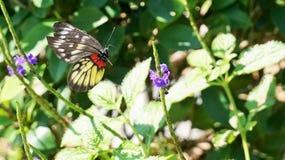 Punti di volo della farfalla in un giardino immagine stock